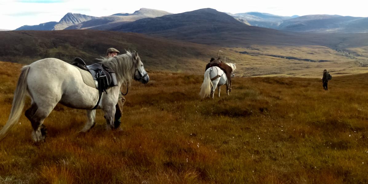 Hirschpirsch mit Hill Ponys Schottland