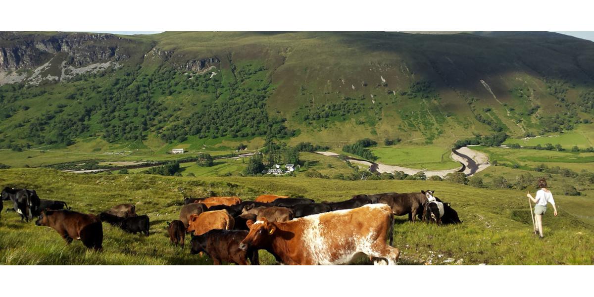 Schottland Glen mit Rindern mit Blick auf den Lachsfluss und die Lodge