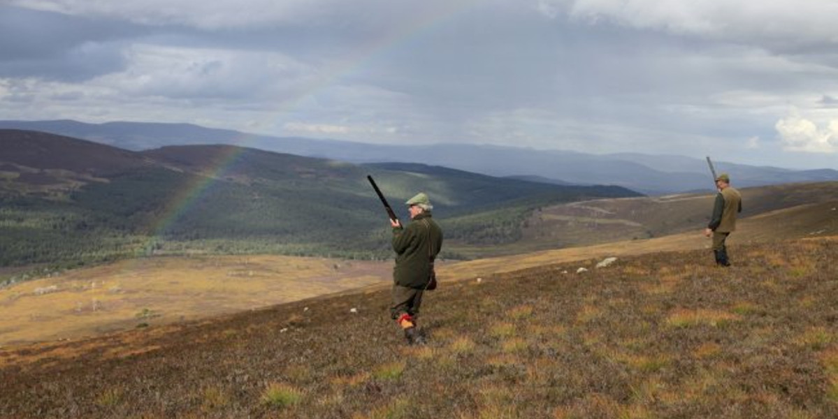 A line of guns walked up grouse shooting on a moor in Scotland