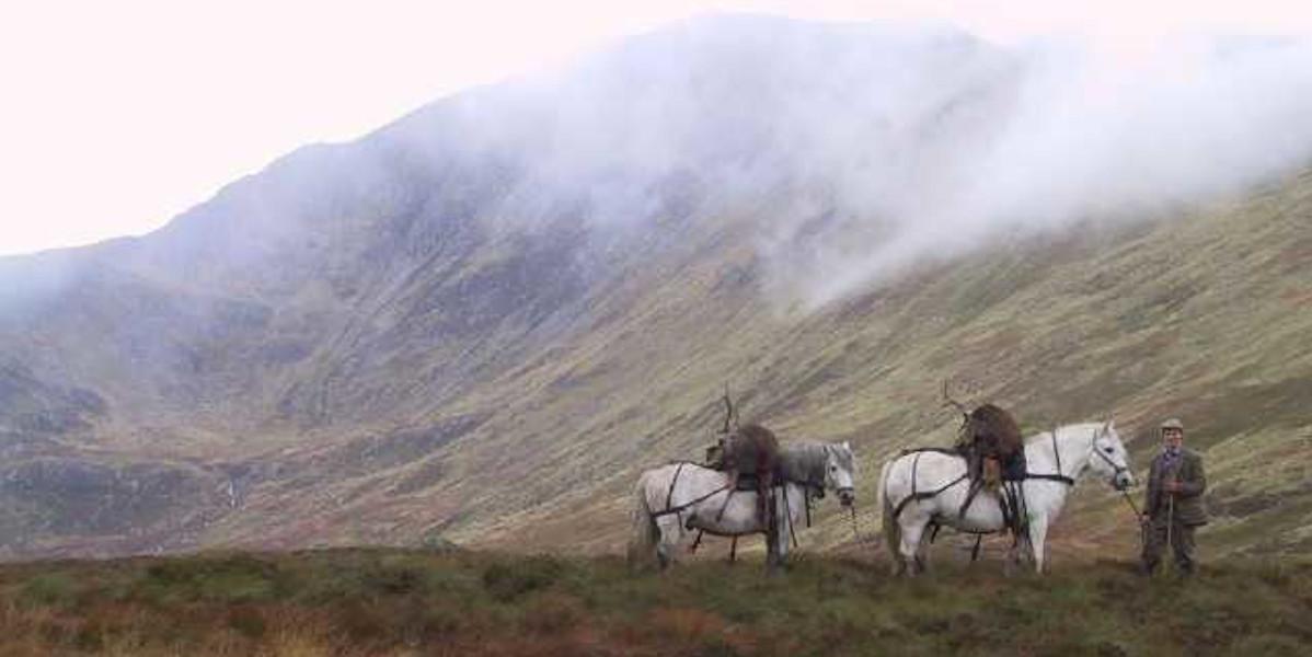 Misty Scottish hills with deer stalker and hill ponies
