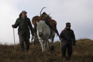 Los acechadores de ciervos con escocés hill pony llevando un ciervo