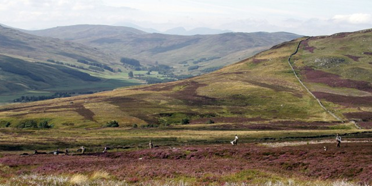 Scottish highlands heather covered grouse moor with beaters line