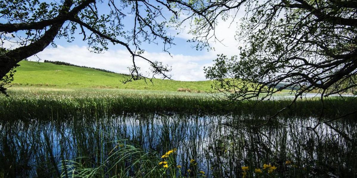 Étang à truites du domaine écossais entouré d'arbres