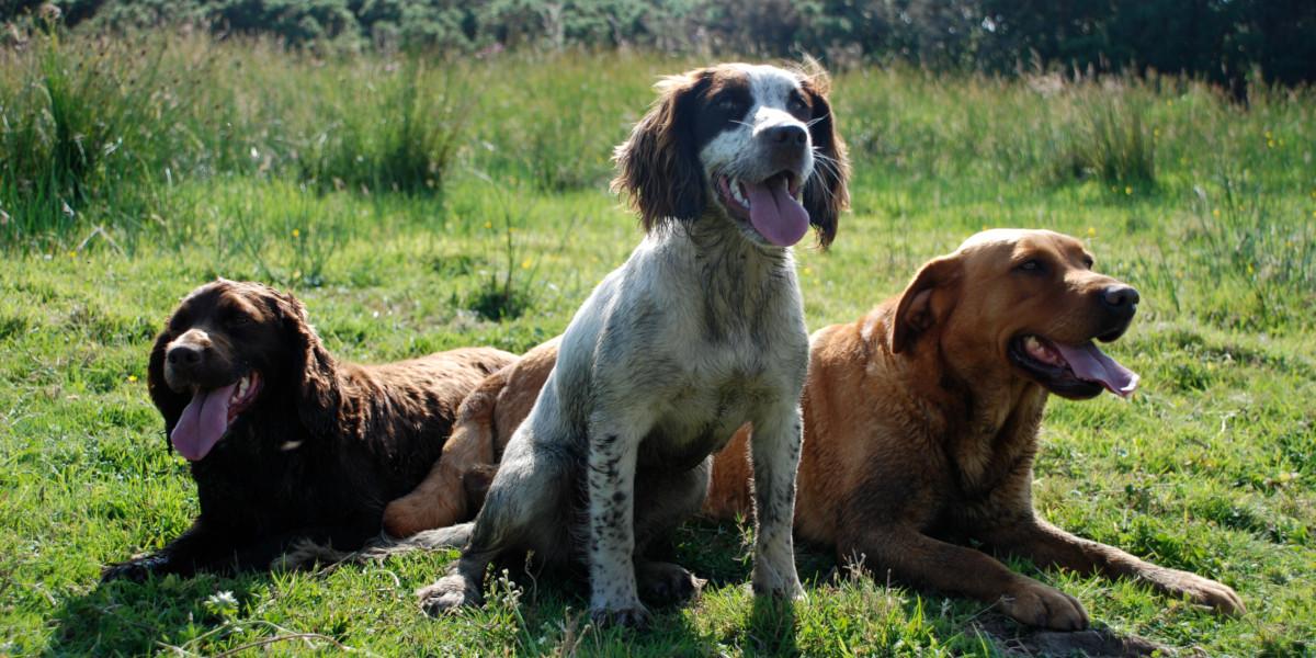 three dogs Scotland