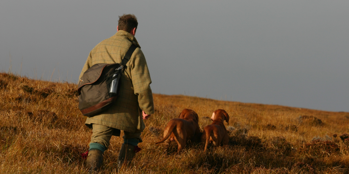 dog handler in tweed with 2 pointer dogs