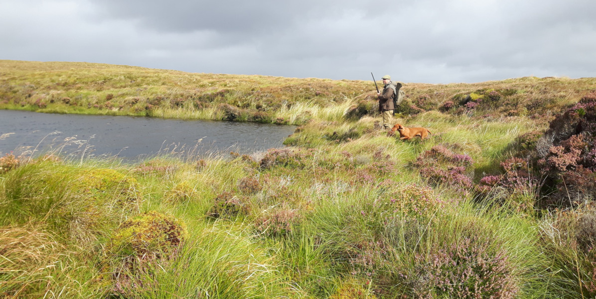 grouse and snipe shooting over pointer beside Scottis loch