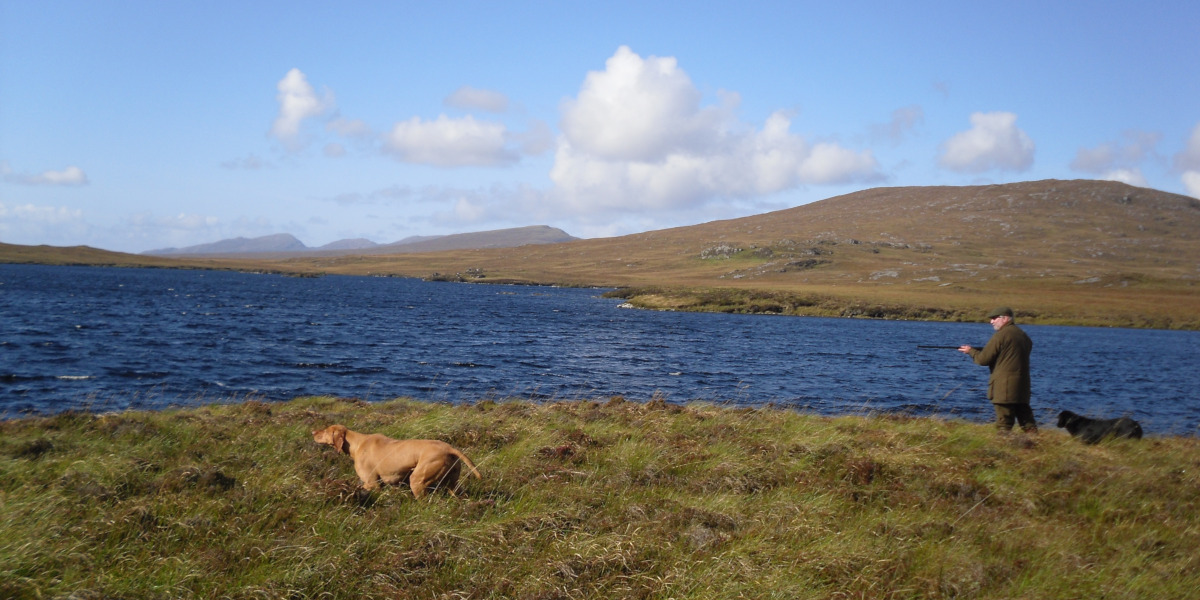 grouse shooting over pointers Scotland loch side