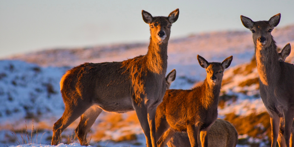 cerf dans un paysage hivernal