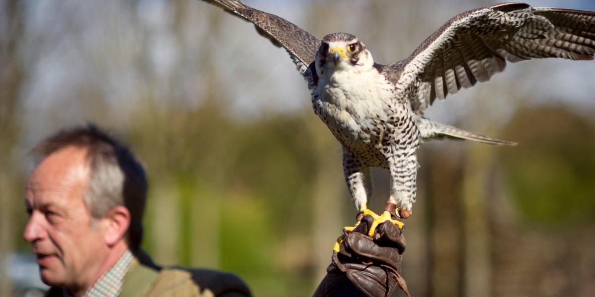 falconer with bird of prey