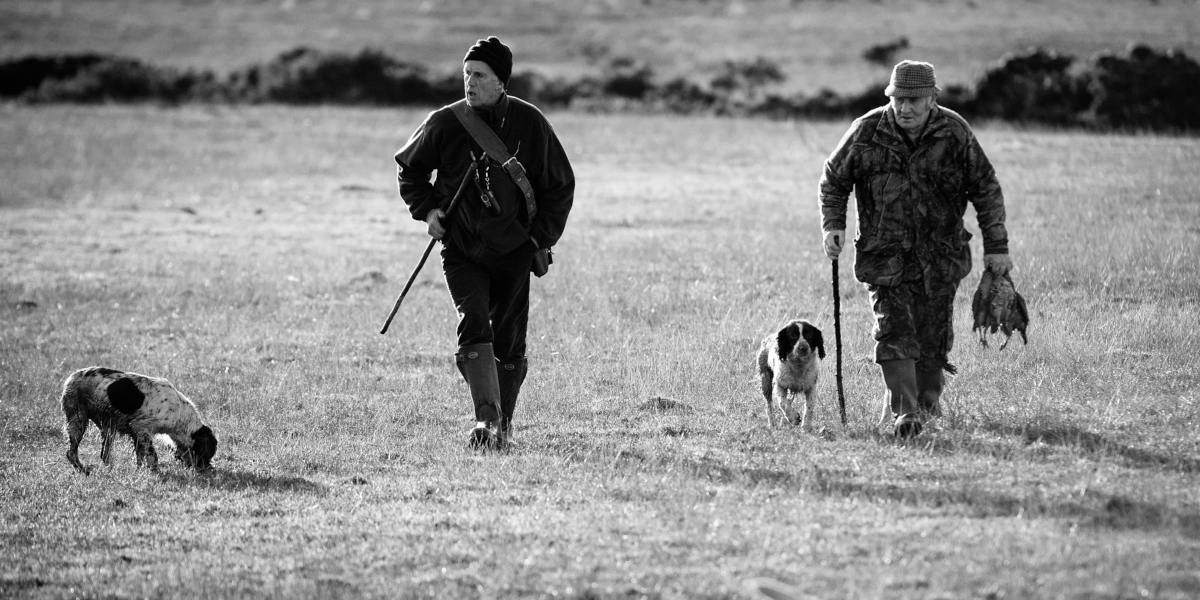 two men with two gundogs picking shot birds black and white