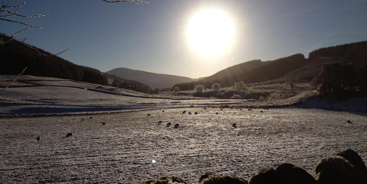 Frostiges Feld mit Schafen und Sonne