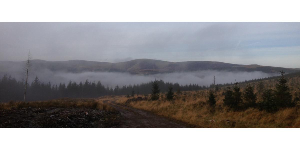 Schottische Grenzhügel mit Pinien und Nebel