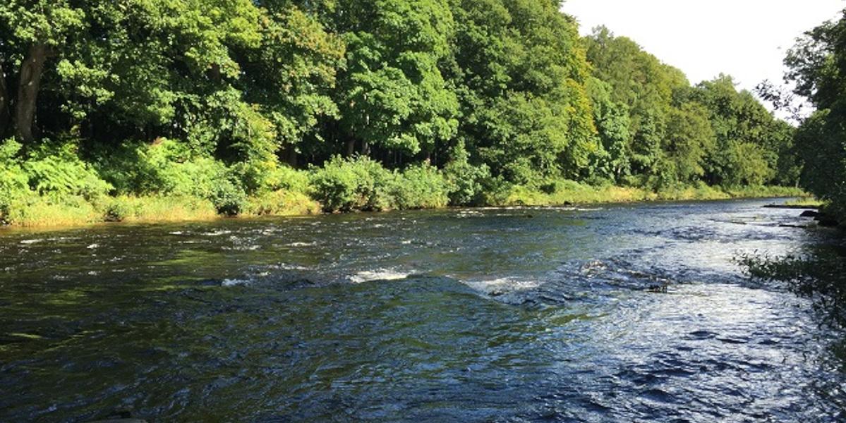 Rivière slamon écossaise