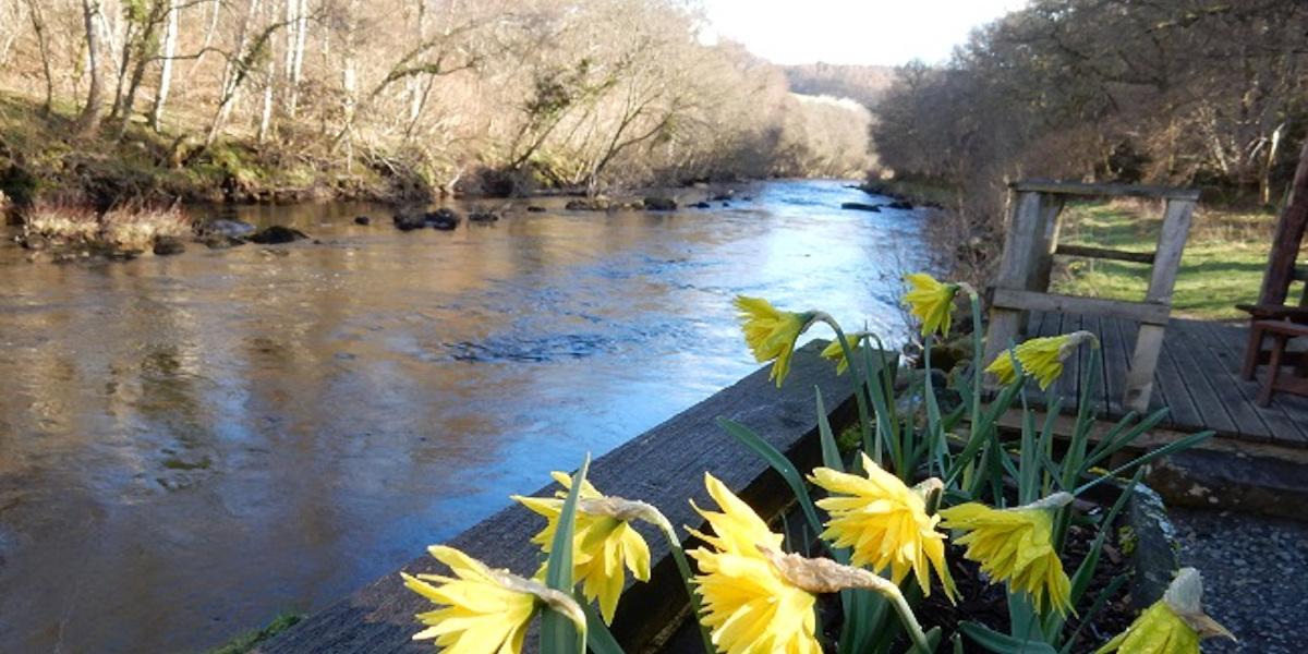 Rivière écossaise avec des jonquilles en premier plan