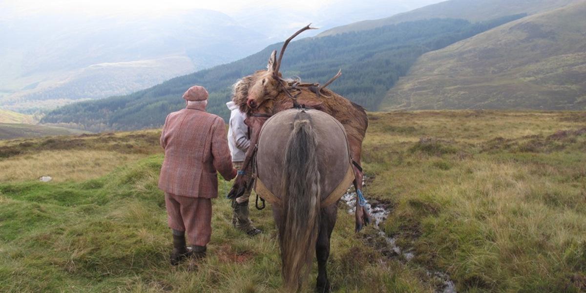 hill pony with stalker, deer and handler
