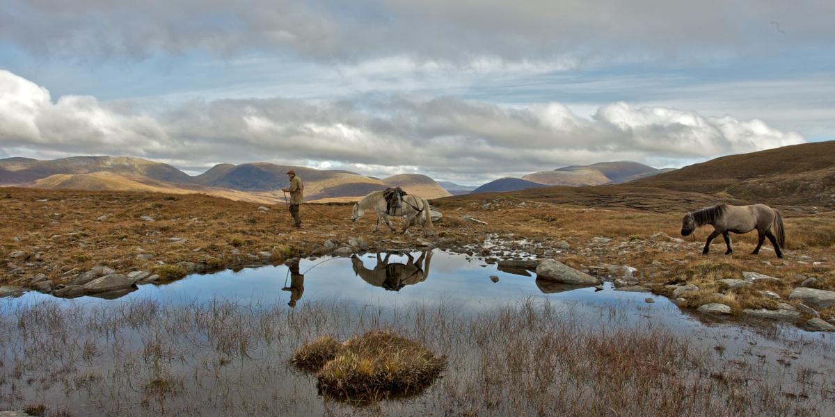 harceleur avec 2 poneys des collines écossaises