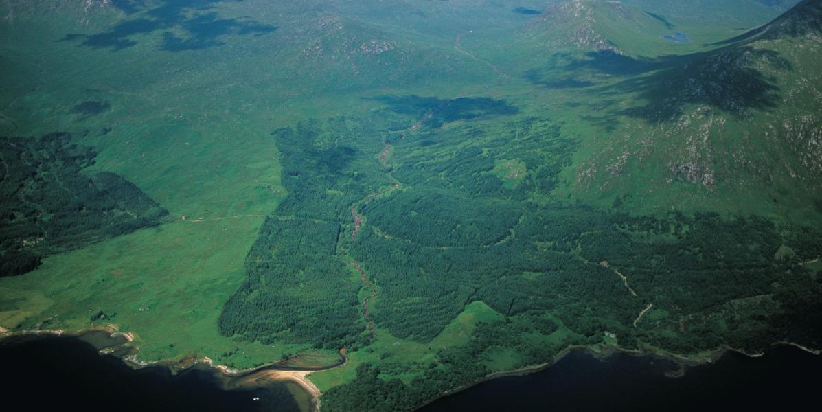 aerial shot Scottish forested hillside