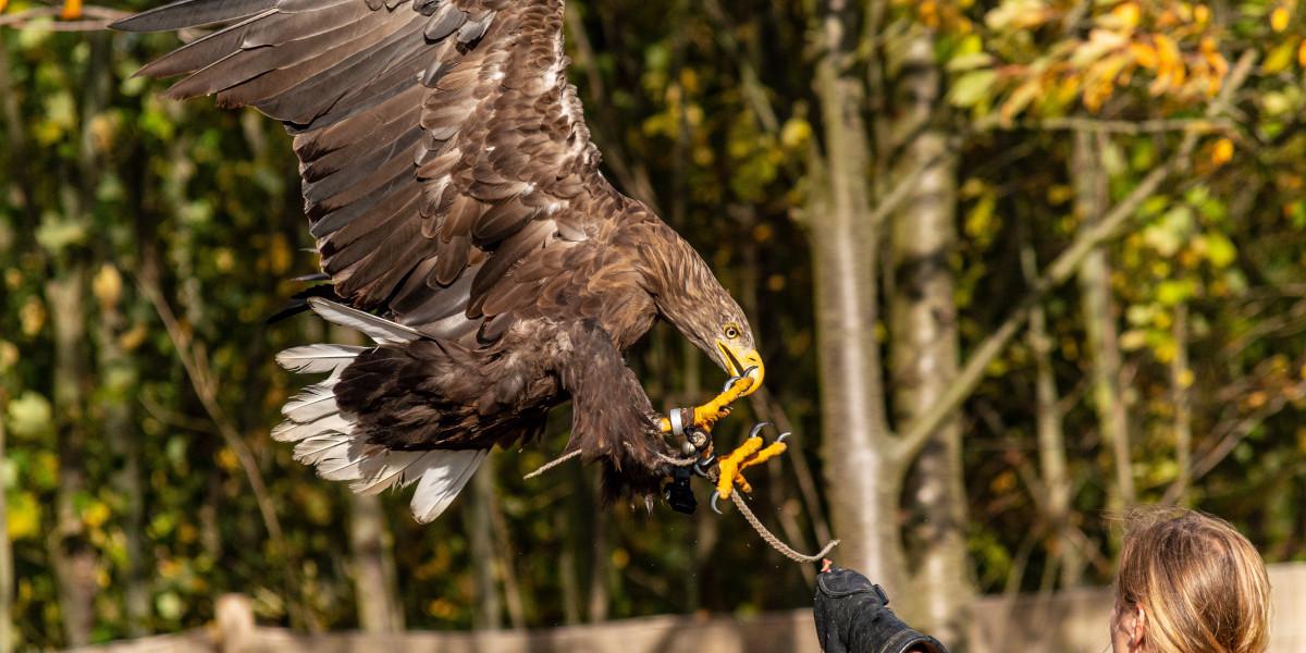 falconer med örn