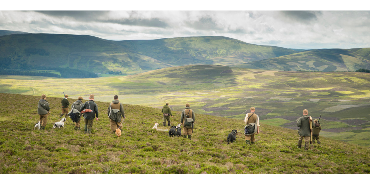 guns, beaters and dogs on grouse moor