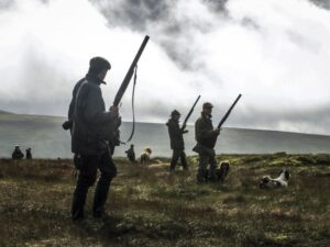 men with guns and dogs on a grouse moor