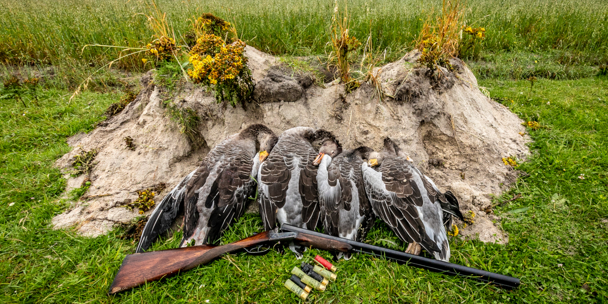 geese and shotgun
