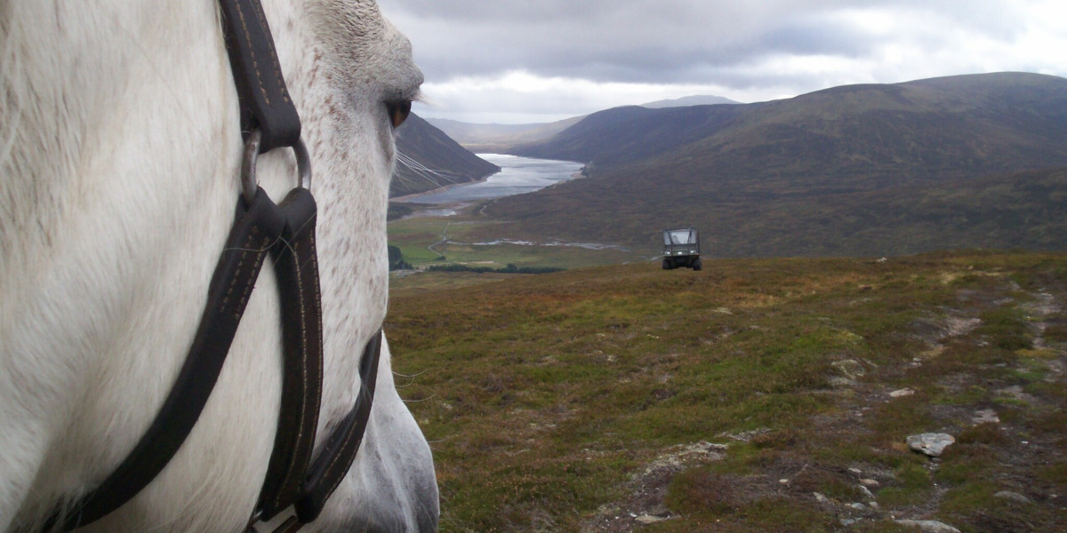 view of hill and loch with a pony's head in the foreground